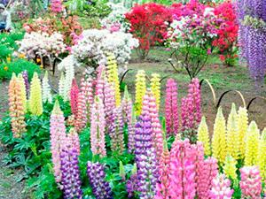 Как правильно подобрать цветовую гамму для сада